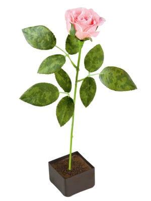 la rose gourmande de la manufacture cluizel