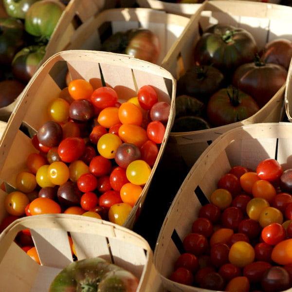 cultiver des tomates sur un balcon culture des tomates tout savoir journal des femmes. Black Bedroom Furniture Sets. Home Design Ideas