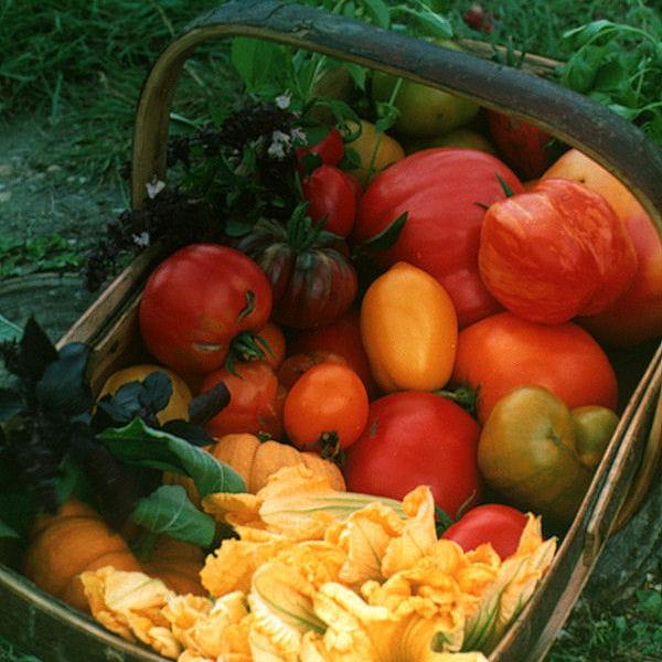 conserver des tomates culture des tomates tout savoir journal des femmes. Black Bedroom Furniture Sets. Home Design Ideas