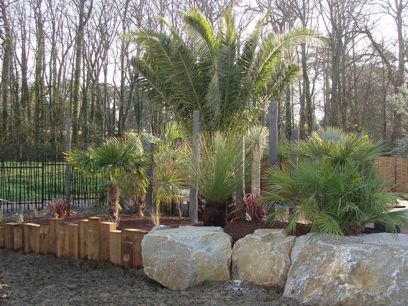 un massif de palmiers un jardin sec et exotique avec terrasse journal des femmes. Black Bedroom Furniture Sets. Home Design Ideas