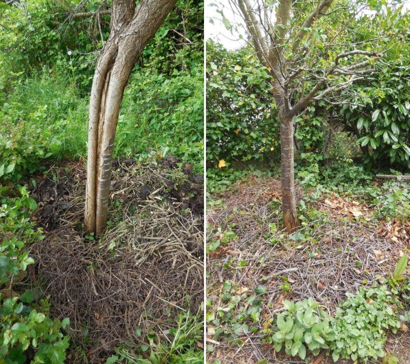 Les avantages du paillage le paillage v g tal pour un jardin sain et naturel journal des femmes - Quoi planter en automne ...