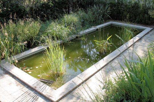Bassin naturel l 39 amarine maison de couleur sous le for Quelle epaisseur de bache pour un bassin