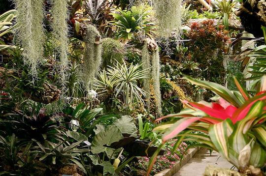 Photos des lieux Foret-tropicale-humide-284719