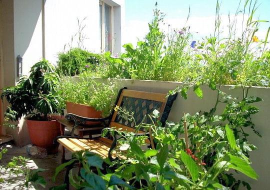 Terrasse Vegetale Belgique : Terrasse v u00e9g u00e9tale en appartement De somptueuses