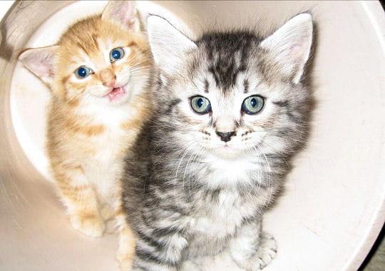piégés par leur curiosité, ces deux chatons ont fait la même bêtise... les voila