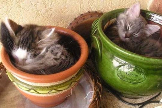 dans les pots de fleurs les chatons dans de dr les de situations journal des femmes. Black Bedroom Furniture Sets. Home Design Ideas