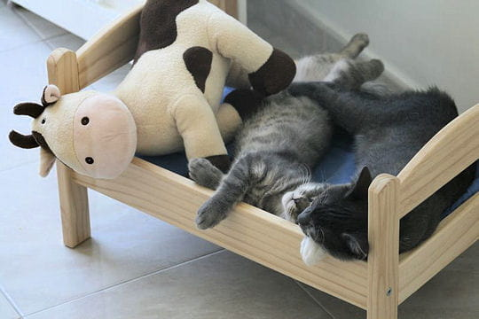 les lits h tel pour chats journal des femmes famille. Black Bedroom Furniture Sets. Home Design Ideas