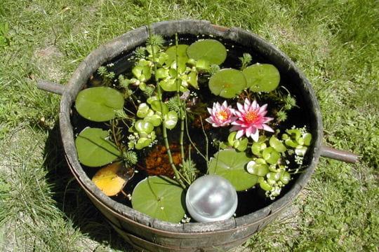 Le bassin dans le tonneau des pots et jardini res qu 39 il fallait oser journal des femmes - Bassin dans un tonneau marseille ...