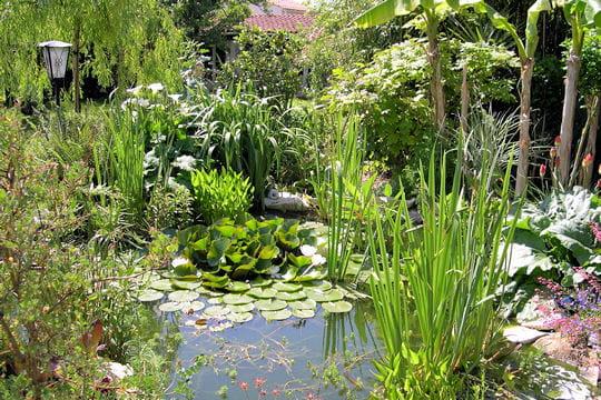 un bassin exotique et vert les plus beaux bassins journal des femmes. Black Bedroom Furniture Sets. Home Design Ideas