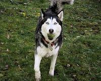 Mon chien veut sans cesse jouer : Comprendre son chien