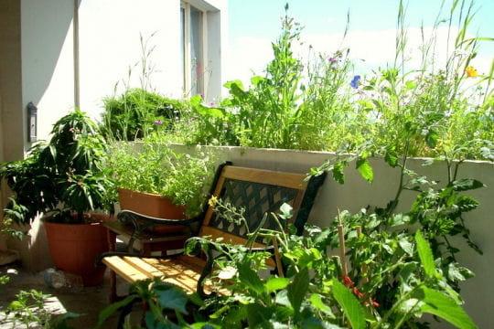 Du vert au milieu de la ville les plus beaux balcons des for Deco jardin plantes