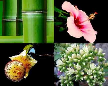 Les plantes exotiques pour les balcons les plantes - Plantes pour balcons ...