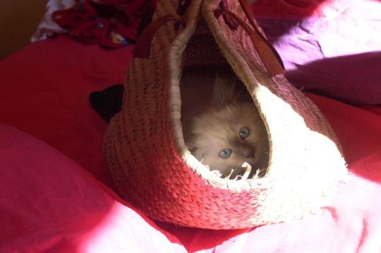 Pr t pour le pique nique les chatons dans de dr les de situations journal des femmes - Pique nique original ...