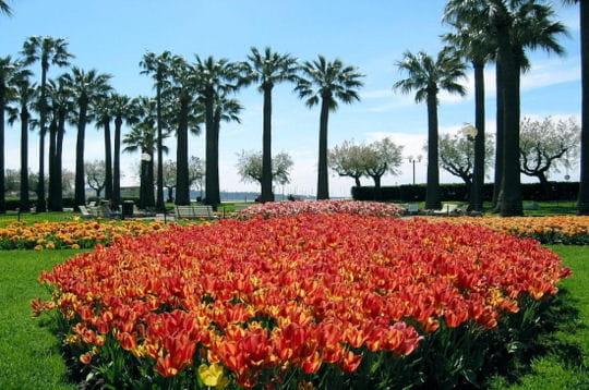 http://www.journaldesfemmes.com/jardin/magazine/photo/de-l-exotisme-pour-un-petit-air-d-ailleurs/image/croisette-441865.jpg