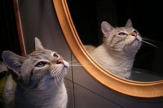 Miroir mon beau miroir a la rencontre de vos chats for Miroir des chats