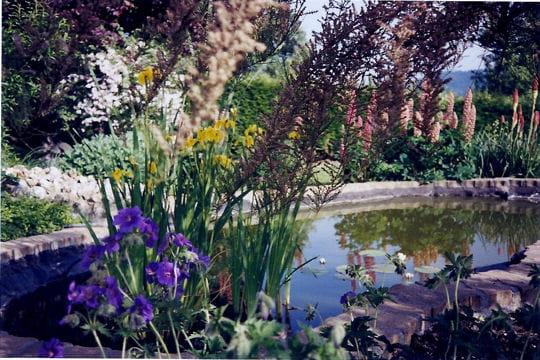 un jardin de plantes et fleurs vivaces