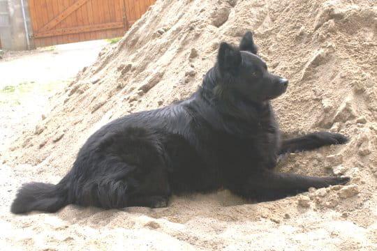 un gros ours en peluche les surnoms de vos animaux de. Black Bedroom Furniture Sets. Home Design Ideas
