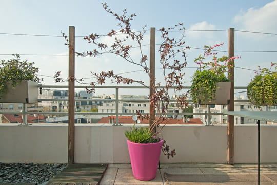 Des plantes grimpantes d coratives visite d 39 une terrasse for Plantes decoratives jardin