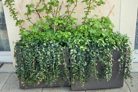 Des plantes tombantes aussi visite d 39 une terrasse trois for Plantes interieur tombantes