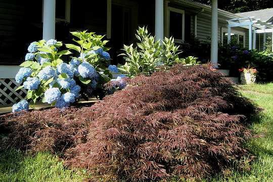 Jardin outre atlantique vos plus beaux jardins en t for Atlantique jardin
