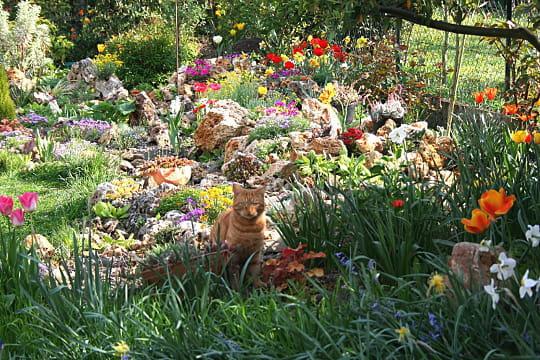 Crumble devant la rocaille fleurie le jardin de dani le for Rocaille fleurie