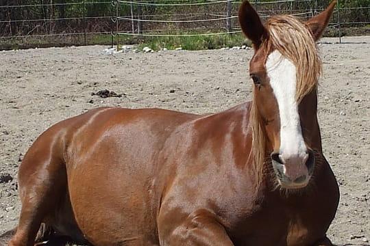 Une belle coupe de chevaux