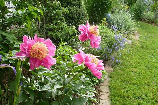 La simplicit de la pivoine le jardin des grandes vignes d 39 anne marie journal des femmes - Le jardin des grandes vignes ...