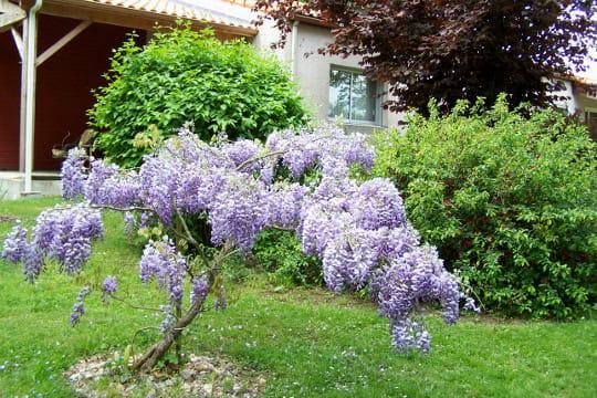 Un jardin exotique et color election du plus beau for Blythe le jardin de maman
