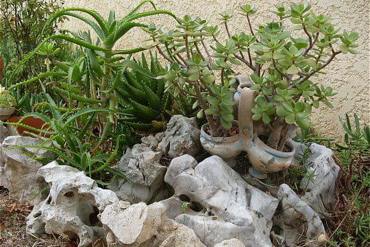Un florilège de plantes succulentes : Le jardin aux parfums enivrants ...