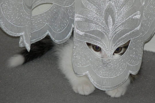 http://www.journaldesfemmes.com/jardin/animaux-domestiques/carnaval-des-animaux/image/eliott-793306.jpg