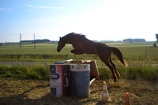 Saut d 39 obstacle les lectrices admiratrices de chevaux journal des femmes - Frison saut d obstacle ...