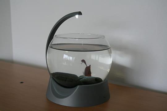 un petit aquarium plein de cachettes avoir un aquarium au bureau le test journal des femmes. Black Bedroom Furniture Sets. Home Design Ideas