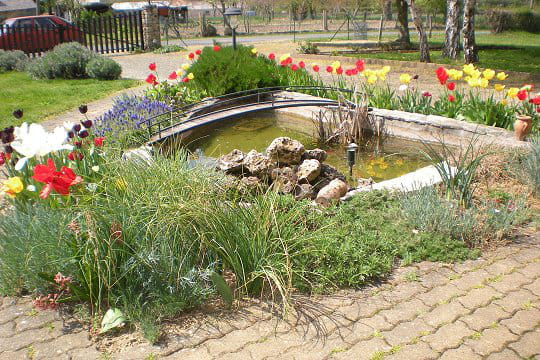 Un agr able bassin biologique les plus beaux bassins for Bassin biologique