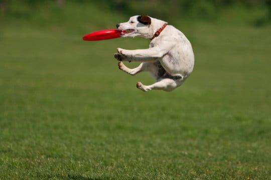 frisbee-chien-958366.jpg