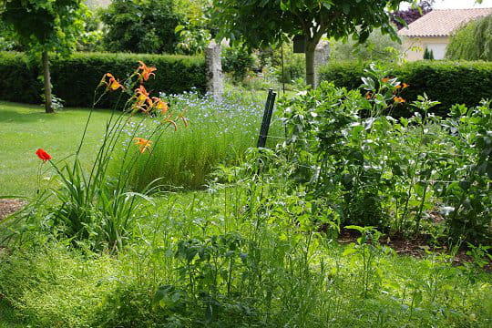 Fleurs et fruits au jardin les jardins de lecteurs for Au jardin des fleurs