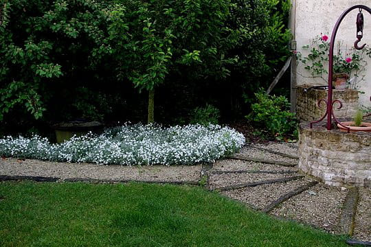 tapis de fleurs blanches un eden au doux parfum de roses With tapis chambre bébé avec parfum chloé fleur de parfum