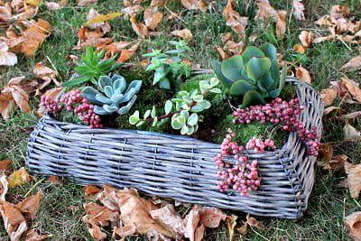 un mini jardin qui viendra embellir votre intérieur.